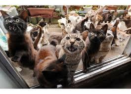 many_cats