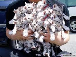 holding_cats