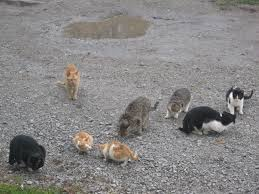 lots_of_cats
