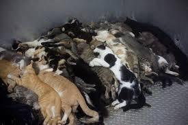 dead_cats
